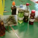 Making Potions Oct Half Term